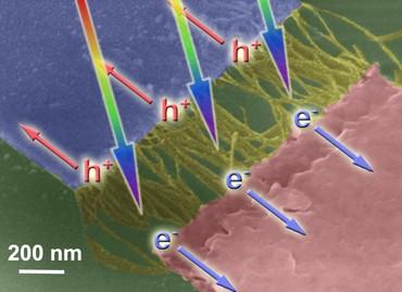 Rasterelektronenmikroskopische Aufnahme von einwandigen Kohlenstoff-Nanoröhren, integriert in ein lichtempfindliches Element.  (Bild: Benjamin Flavel)