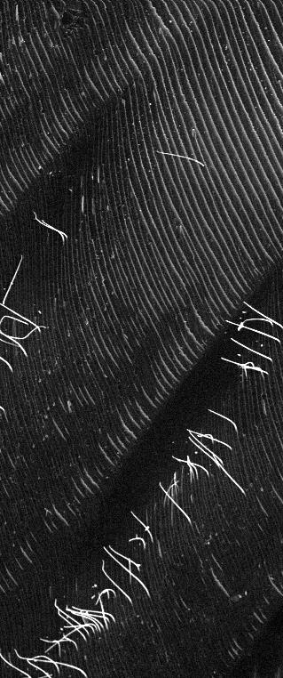 Das Rasterelektronenmikroskop zeigt die geriffelte Struktur der Oberflächenbeschichtung aus Silizium-Oxycarbid und die abstehenden Fasern, die sich bei Temperaturänderungen heben und senken können.